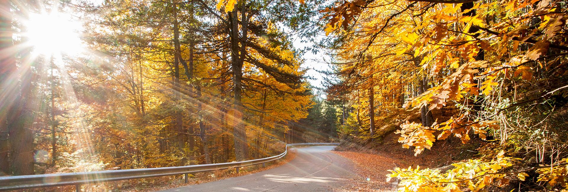 foliage_sila_autunno